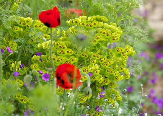 Chelsea Flowers Show London