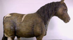 Molly's Shetland Pony Cake on Extreme Cake Makers